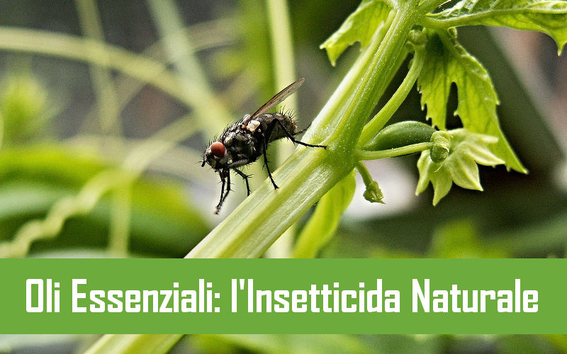 oli essenziali l'insetticida naturale